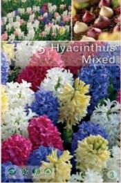007-hyacinthus