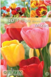 023-tulip