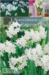 037-narcissus