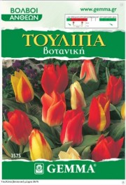botanical-tu;ip