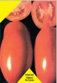 la-tomato