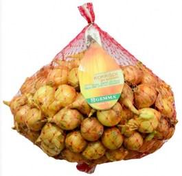 onion-21-24