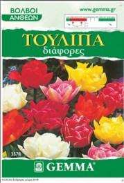 tulip-mix